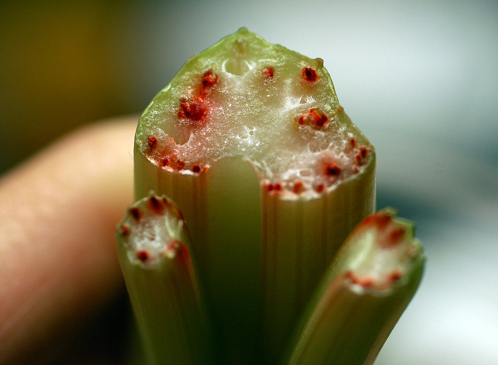 Celery, Red food coloring, Capillary Action